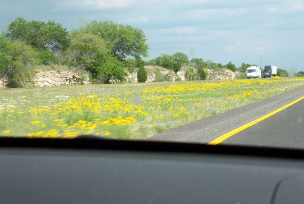 Typewriter Rodeo: Wildflower Season in Texas