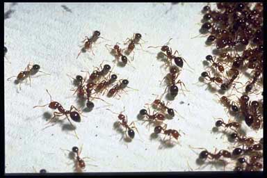 A Sign of Spring in Texas: Fire Ants