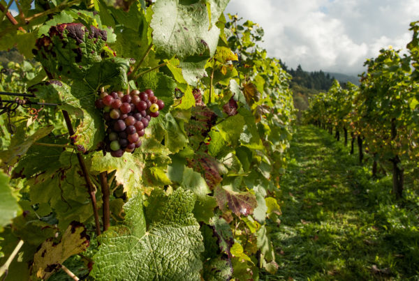 New Bill Would Ensure Texas Wines Are from Fruit Grown in the State