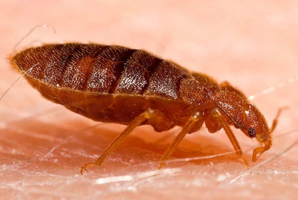 Keep Bed Bugs out of Your Suitcase And Your Home