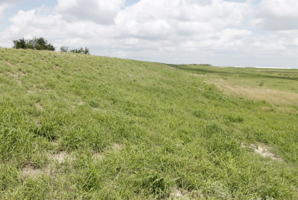 an earthen levee along the south texas border