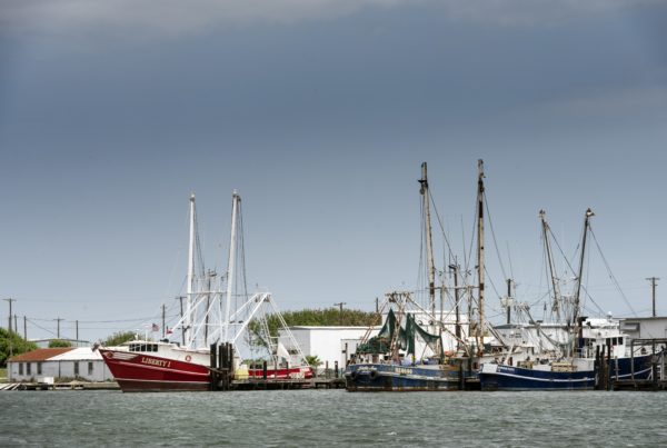 News Roundup: Shrimp Producers Say They Again Face A Worker Shortage