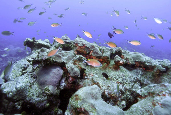 Years In The Making, Plan To Expand A Gulf Marine Sanctuary Faces An Uncertain Future