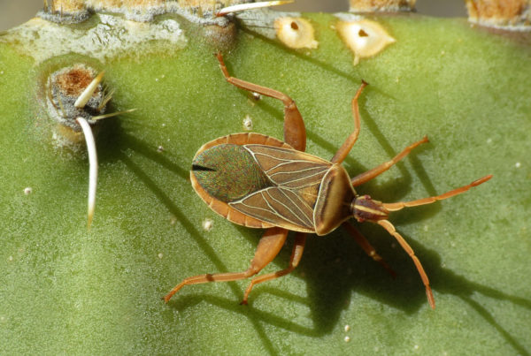 Meet The Insects That Could Damage Your Cacti, Agave & Yucca