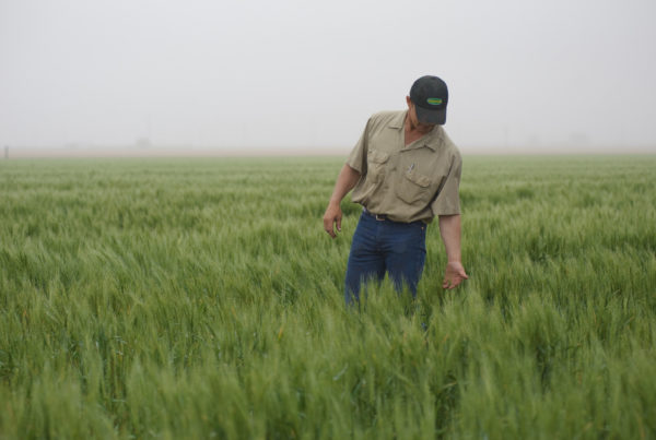 With Tariffs, Bad Weather And Low Prices, More Texas Farmers Struggle To Pay Back Loans